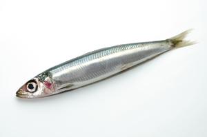 鮮度の落ちた魚